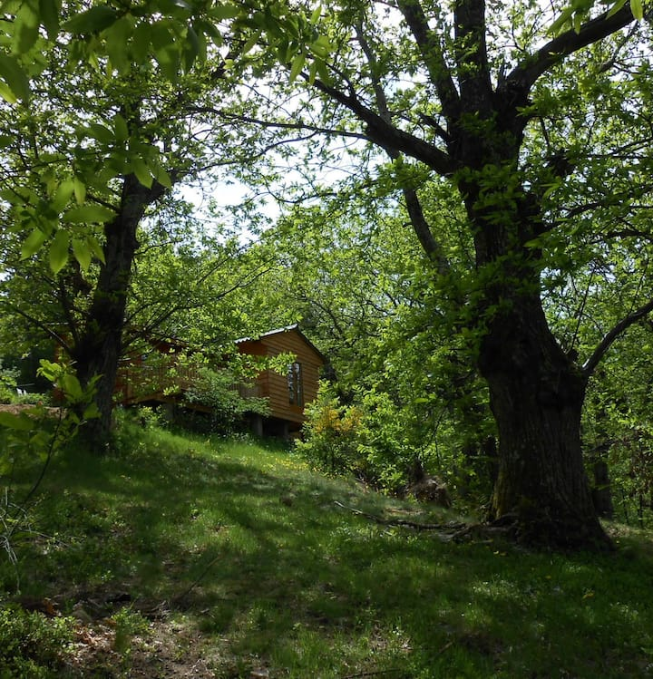 Chalet in the Ardeche forest