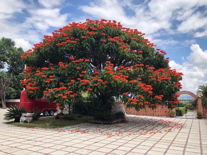 Ex Hacienda San Angel