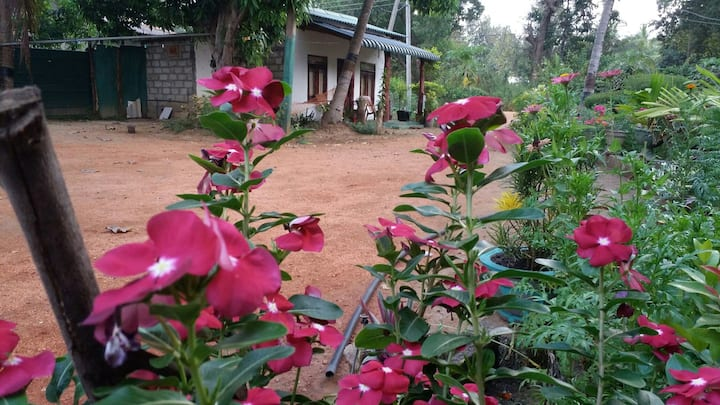 Sigiriya  pikaso home stay