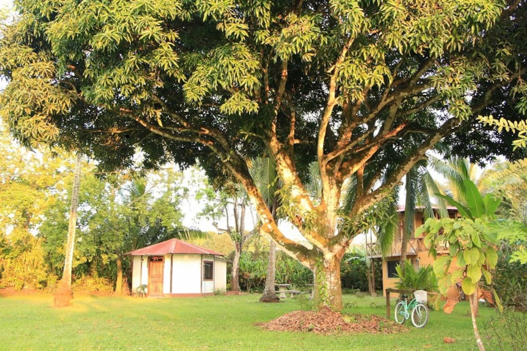 Big mango and other exotic trees grace the property. Octagonal cabina is seen in background.