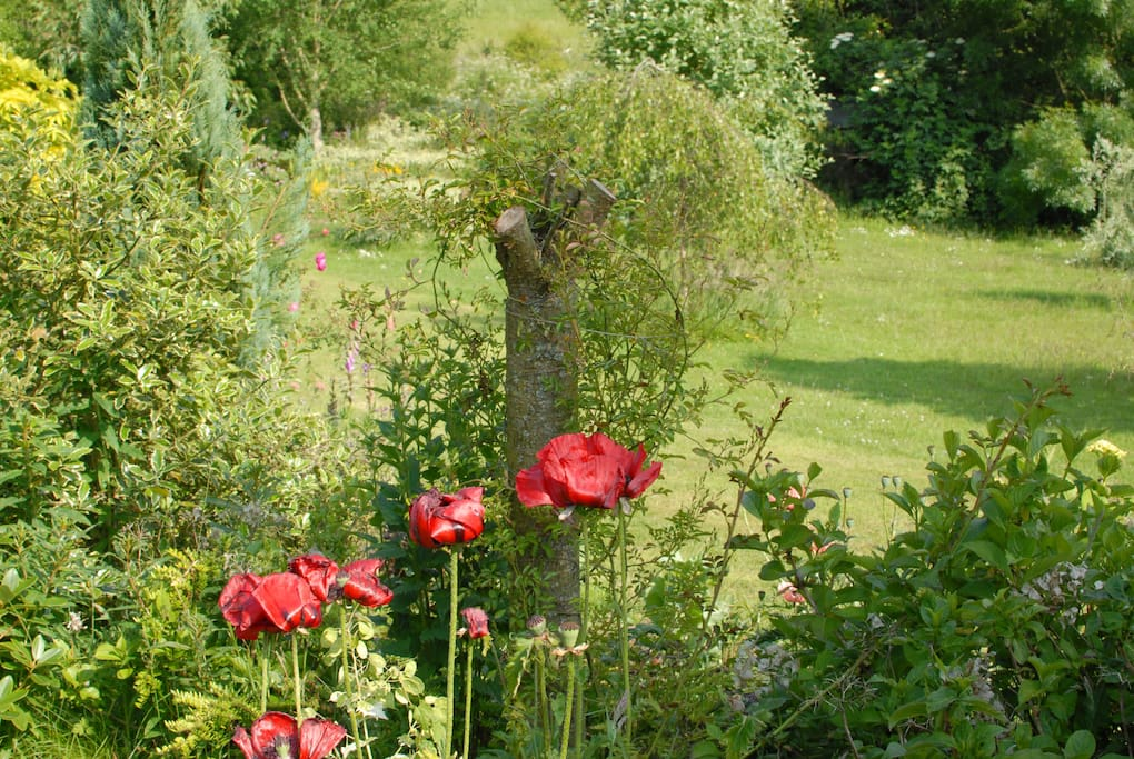 The beautiful garden which leads to the wildlife meadow