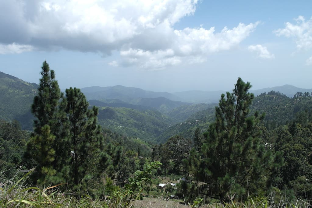 View from the coffee farm