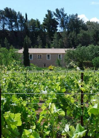 Accueil en BandB, Domaine viticole - Pouzols-Minervois - Bed & Breakfast