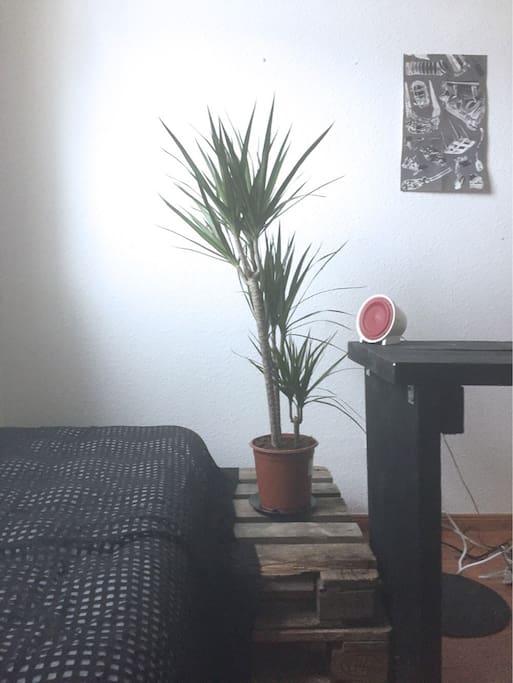Living room. Plant 2