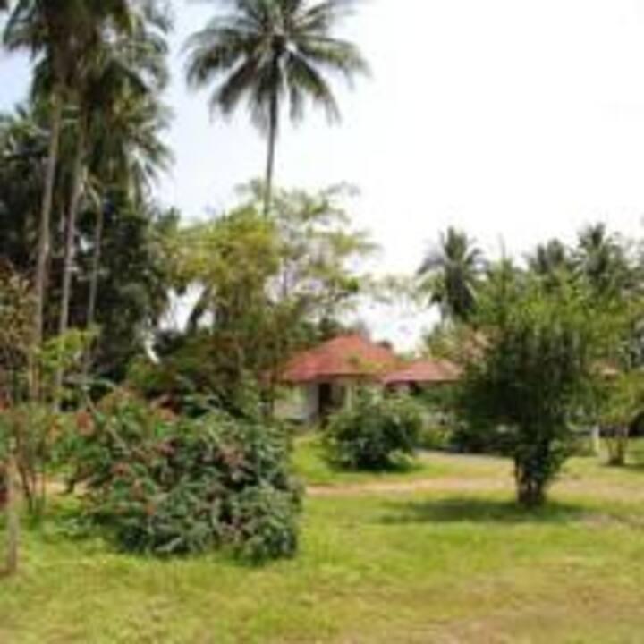 Big Trees Village Samui