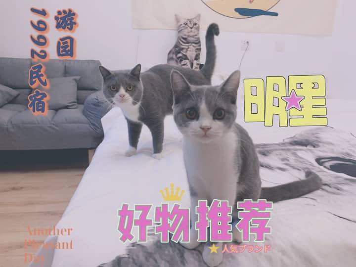 1992--泰安首家猫咪民宿 泰山脚下 火车站 天外村 红门 网红 英短 蓝白猫咪
