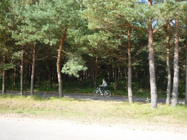 A forest and a bicycle lane across the street.
