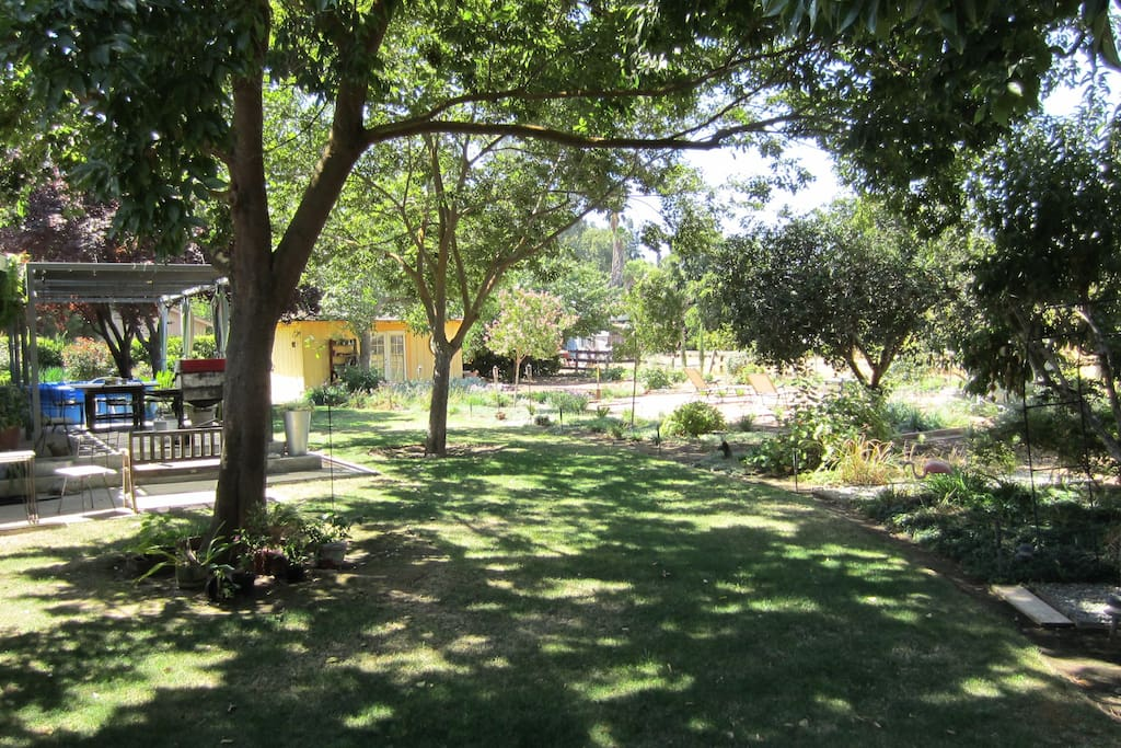 Shady backyard with areas for relaxing or entertaining