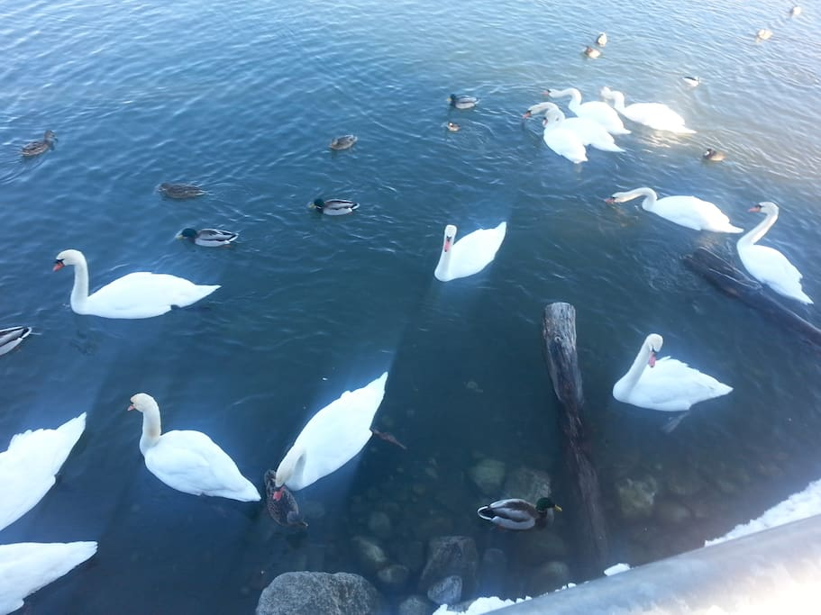 Nearby (10mins walk) to the lake with lots of swans and sights of the city.