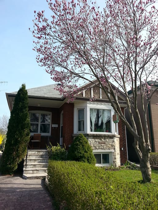The front of the house with the Magnolia tree in bloom!