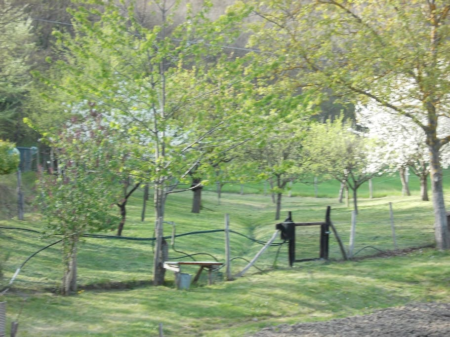 Or pitch your tent in the orchard....both sites are private, but close to shower and bathroom