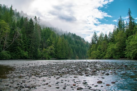 Ravenwood Retreats: Forest Cabin