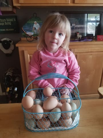 Fresh eggs for the guests