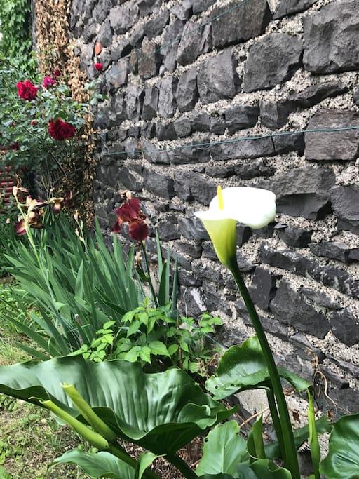 ..jardin et petit recoin le long du mur en pierre de Volvic..