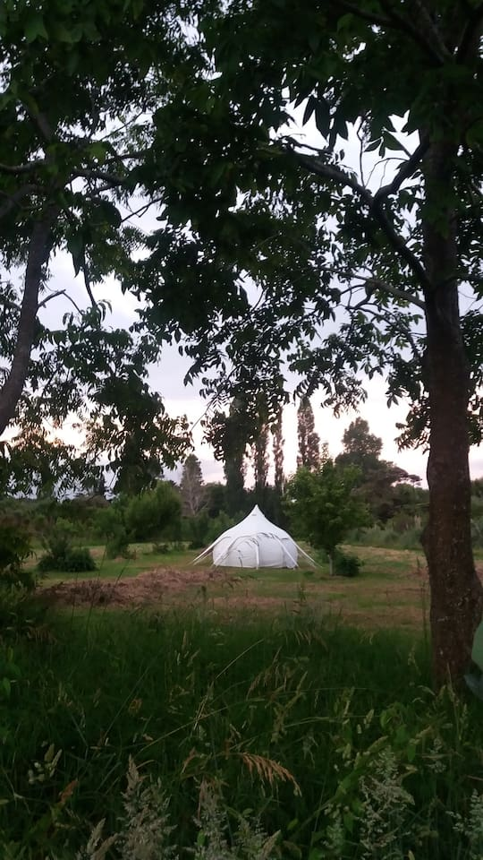 Lotus Tent nestled in the orchard