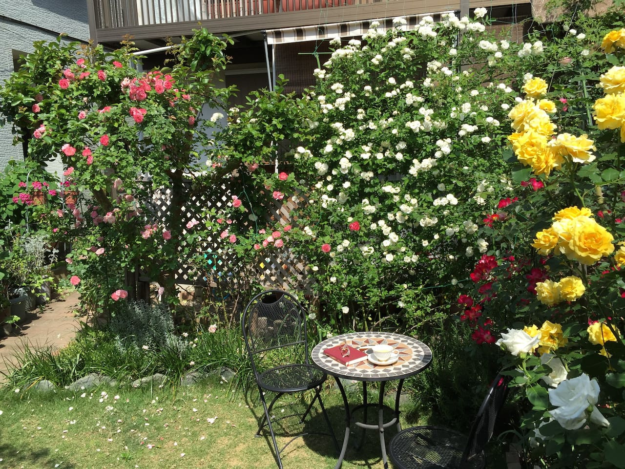 roses in our yard in May & June