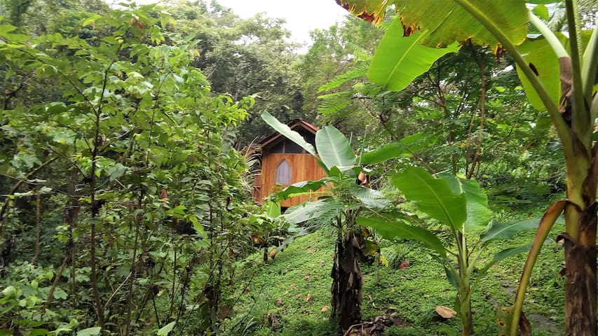 Yogi Jungle casita5 close to ocean