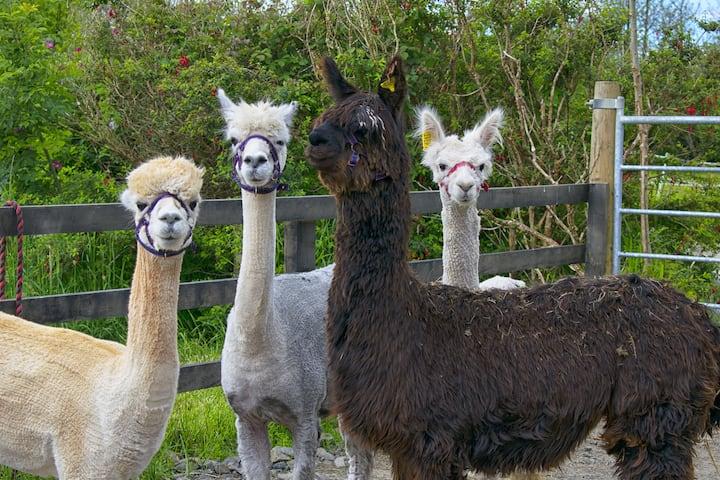 Flying Alpaca - Cosy room en-suite in a rural farm