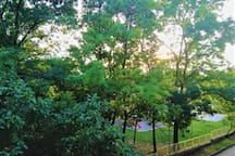 Public Park in Front of the Apartment - Balcony View