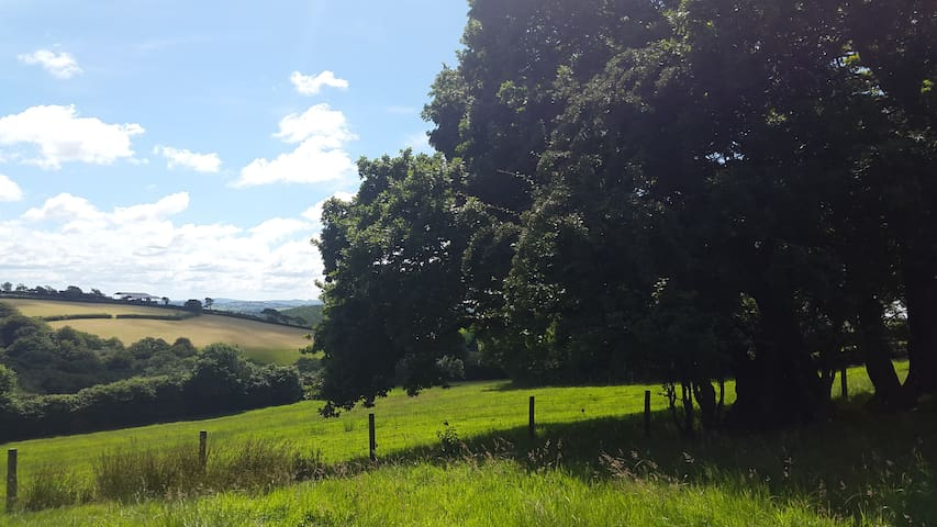There's nothing quite like a glorious sunny day in Devon...
