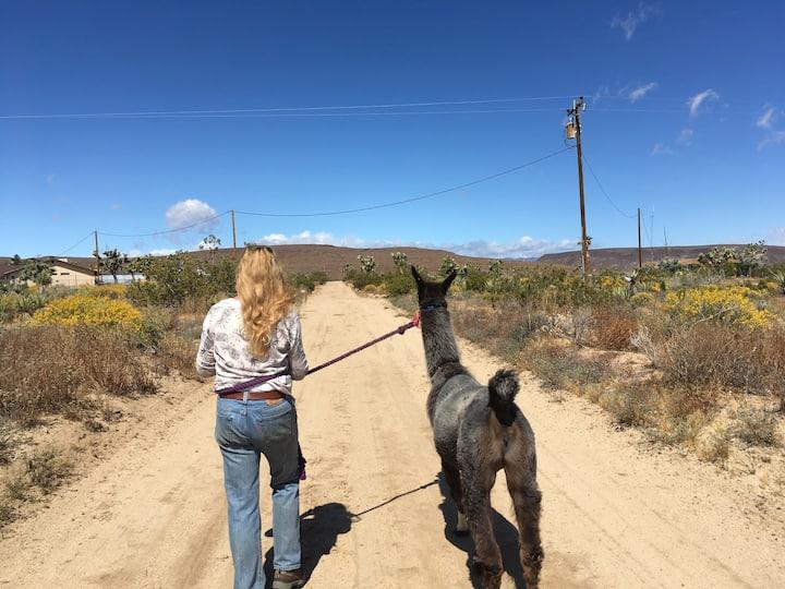 Melissa walking Ixchel