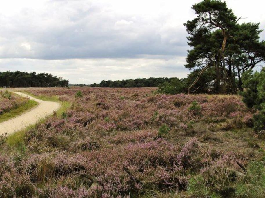 The Strabrechtse Heide is great to explore on foot or by bike (available in the shed).