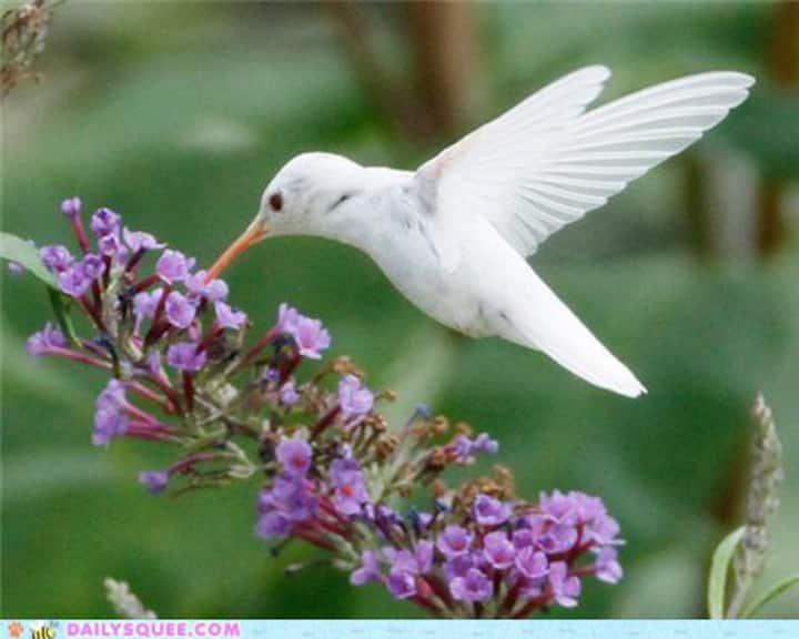 Hummingbird Haven