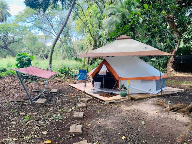 Surf Camp Honu Yurt! 30 days w/refund 4 less days