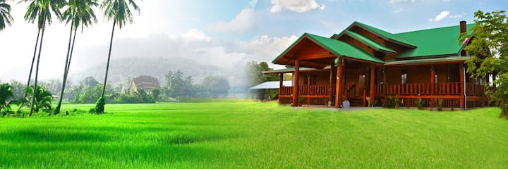 House in middle of the rice field