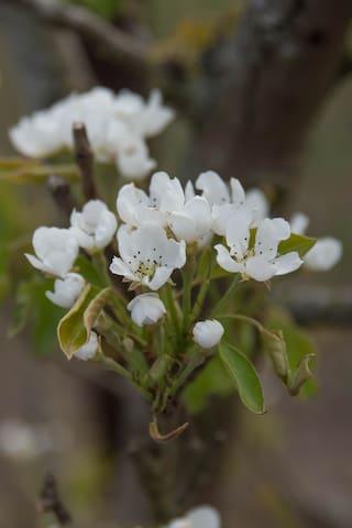 Uien bloemen
