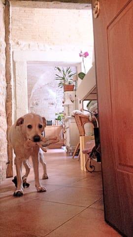 accogliente ed intimo appartamento in centro - แอสโคลิ ปิเซโน