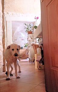 accogliente ed intimo appartamento in centro - Ascoli Piceno