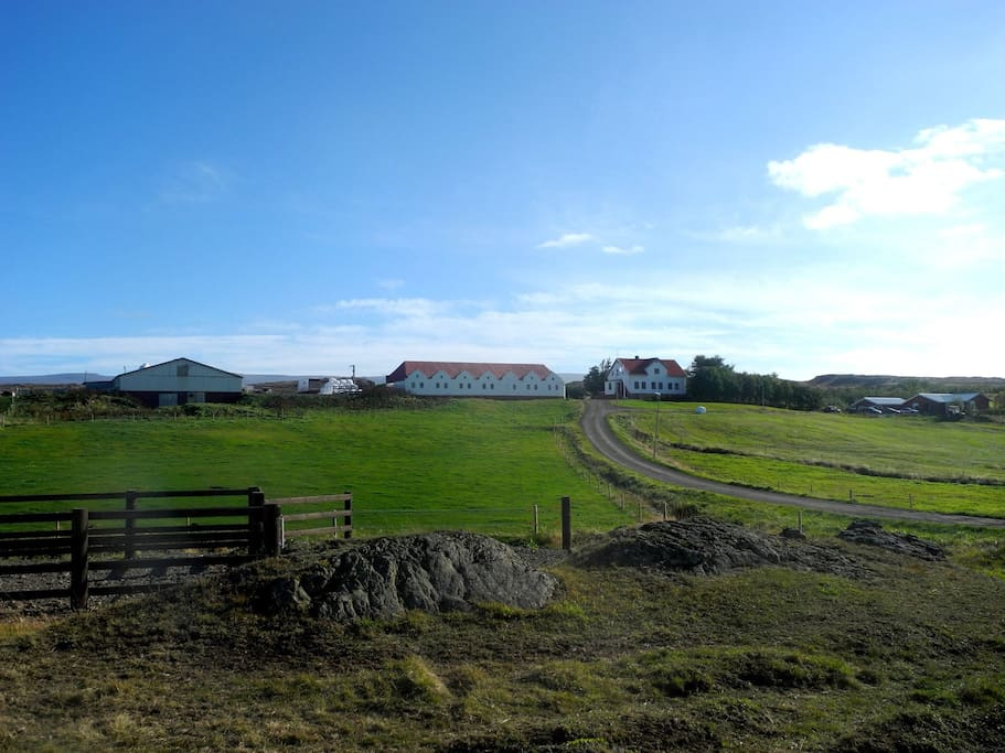This is our farm Helluland, there we have a little guesthouse (at the right) and offer ridingtours for everybody and also longer tours. And also our neighboors (middle house) offer accommodation.
