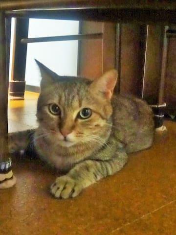 cat's house - Higashi-ku, Fukuoka-shi - Huis