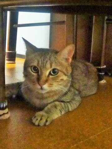 cat's house - Higashi-ku, Fukuoka-shi - Casa