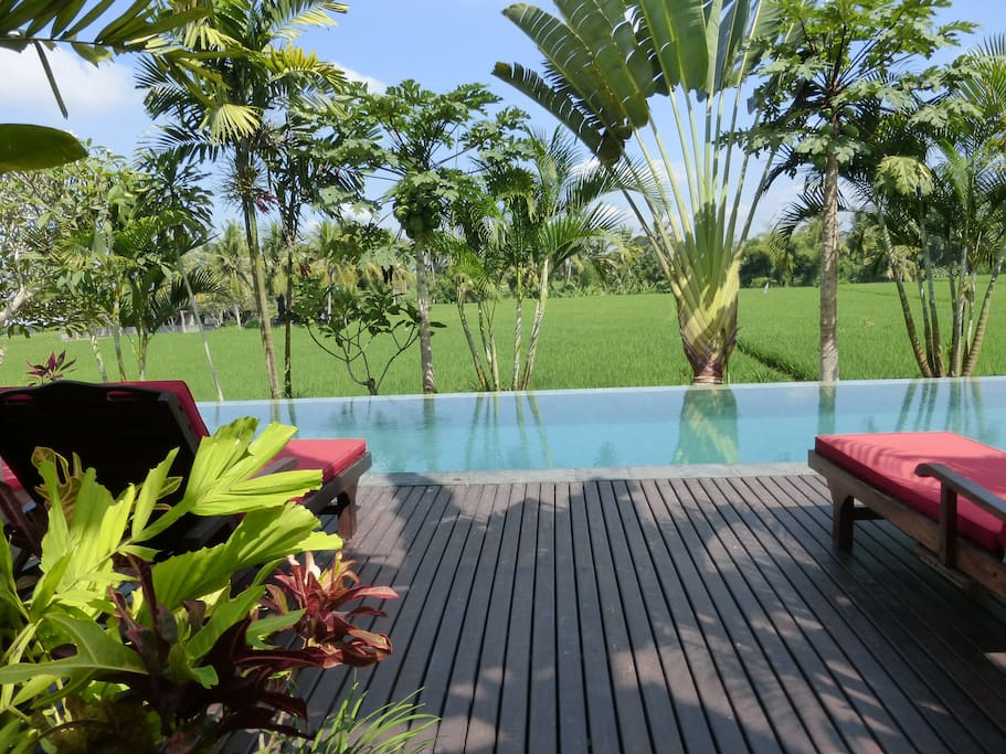 Quite possibly one of the most amazing locations in Ubud!