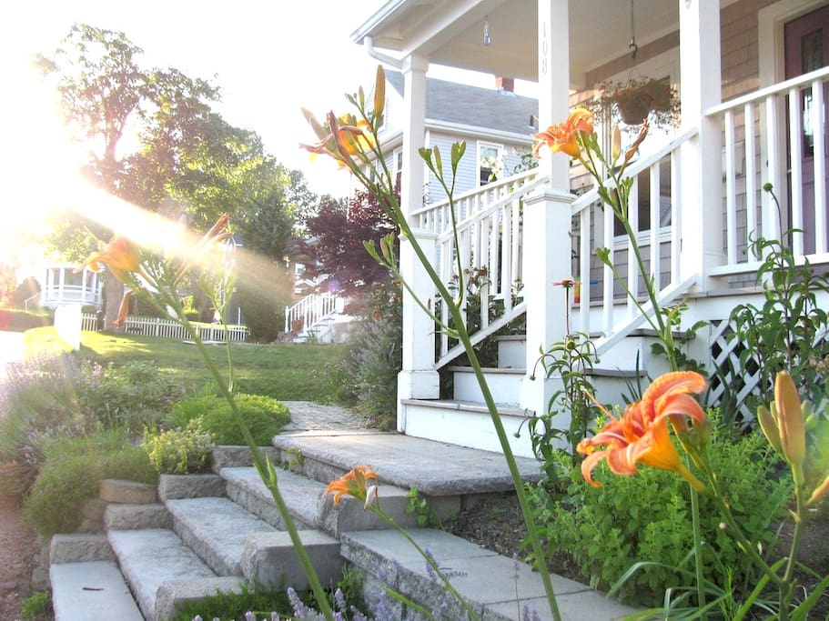 Small front yard, full of life!