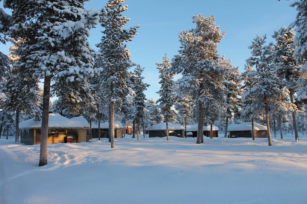 Snowclad forest