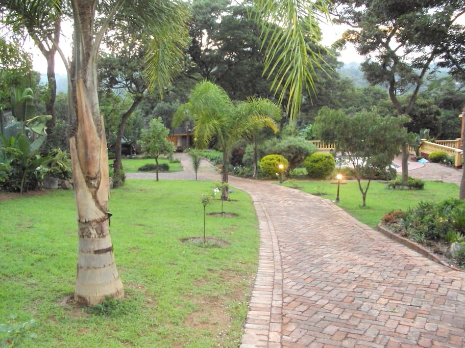 the driveway and garden