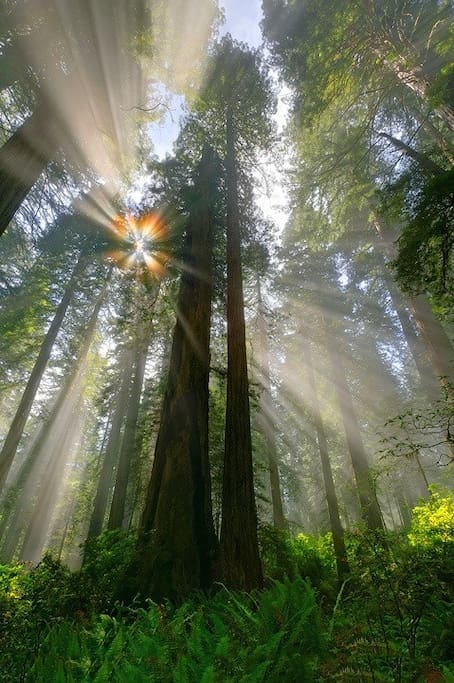 Surrounded by Redwoods