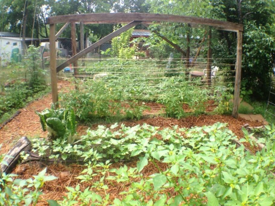 Our happy garden.