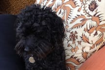 Dog friendly accommodation - Jamie loves to sit with guests when asked!