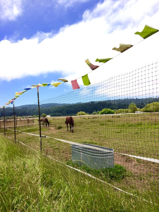 Our hand made prayer flags as deer fencing!