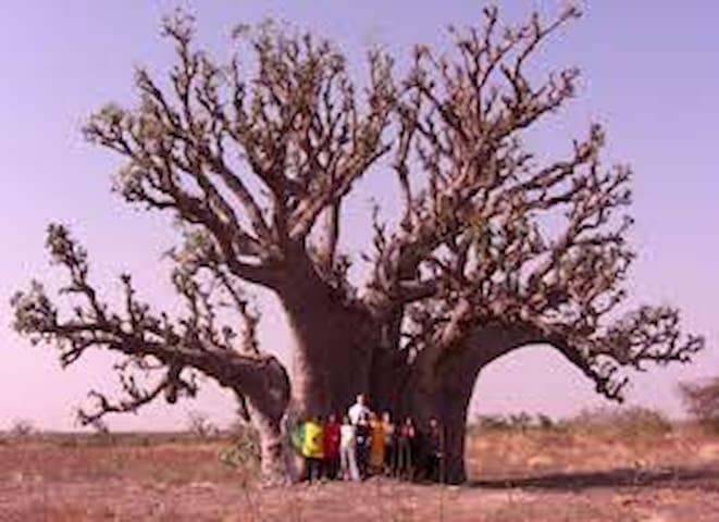 Wrap your arms around this tree!