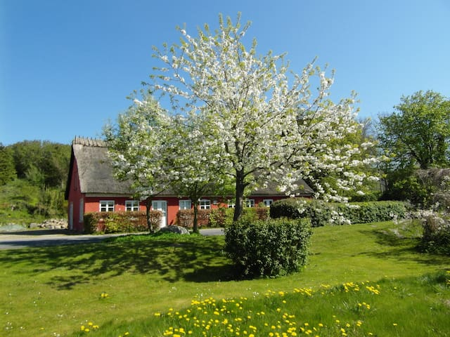 Charming and Cheap - Nyborg - Bed & Breakfast