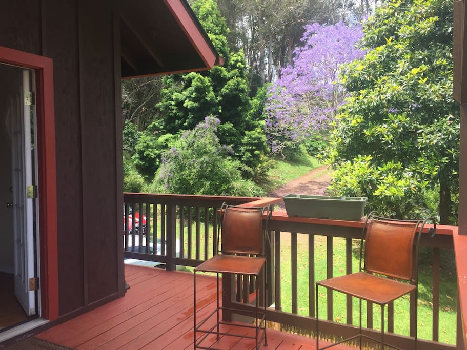 view of the Jacaranda tree from the deck
