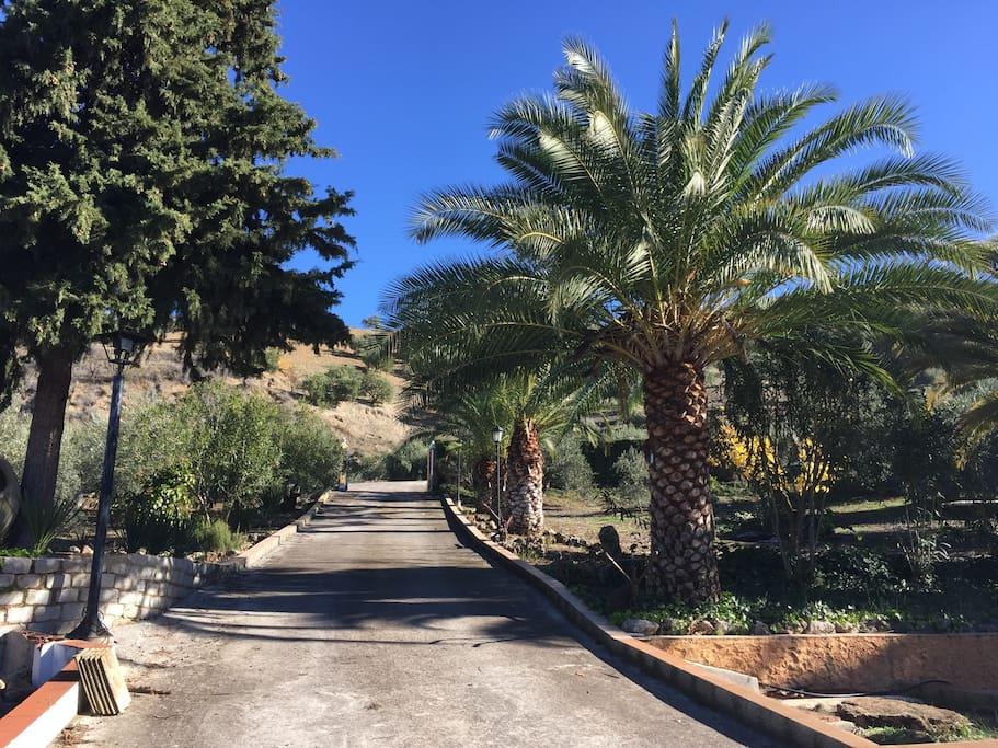 Hacienda la toscana casas de campo en alquiler en priego - Inmobiliarias en cordoba espana ...