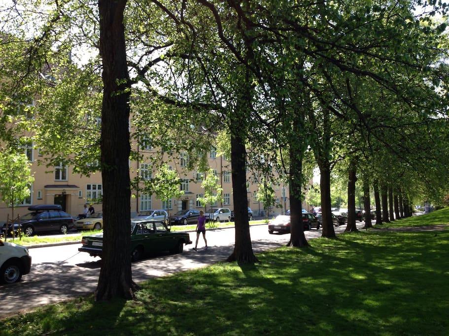 Fasaden ut mot Torshovparken.