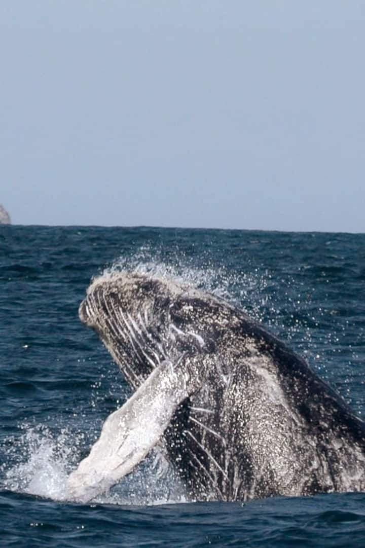 Humpback whales calve here every winter!