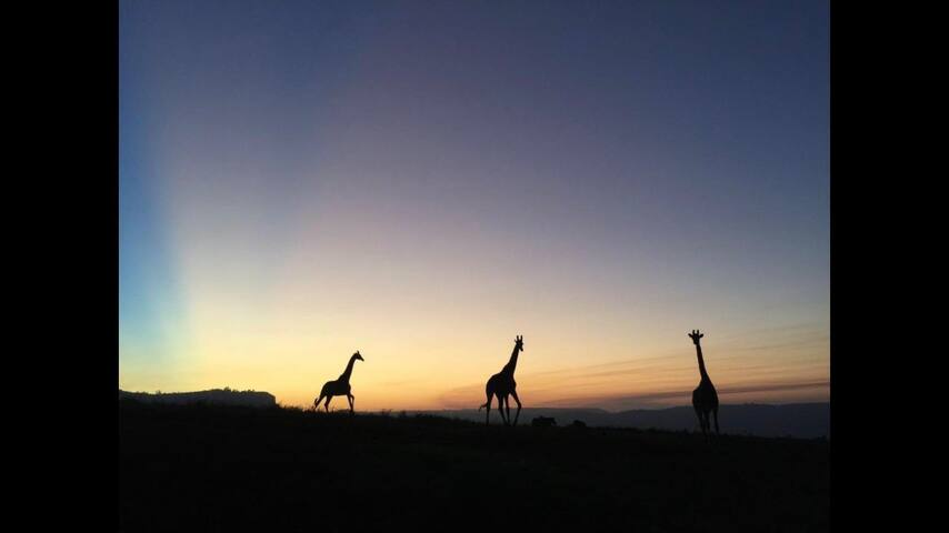 Safari Retreat